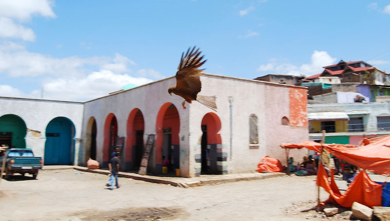 Slyvain Rocher. Eagle on the Meat Market of Harar