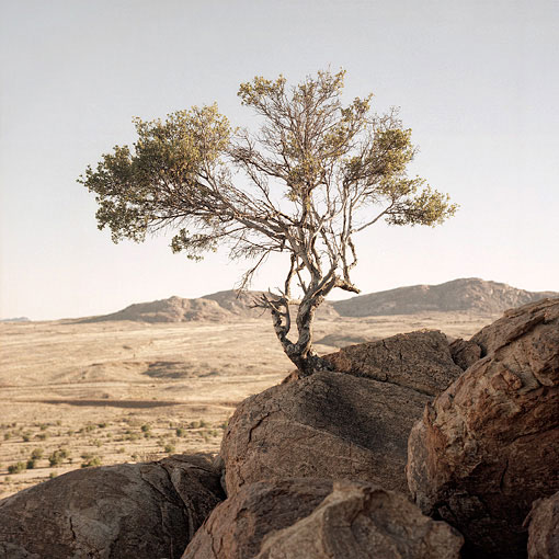 Small tree growing from the rock at Aus.